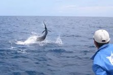 This sailfish put up a major fight